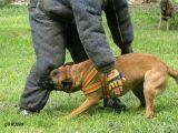 Защитные собаки - IPO-раздел С, Mondioring, Русский ринг, Большой ринг